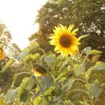 solros grönhetsrådet